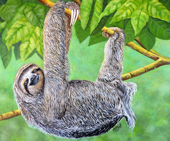 I choose not to be a sloth